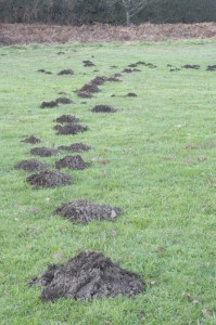 Lots Of Mole Hills